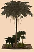 Carboniferous Ferns, Illustration