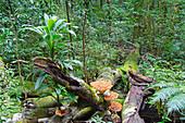 Australian Rain Forest