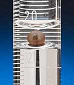 Meniscus of Water & Mercury