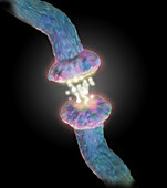 Illustration of a Neurotransmitter