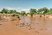Pod of Submerged Hippos, Kenya