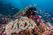 Colourful Reef, Indonesia