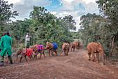 Elephant Parade, Nairobi, Kenya