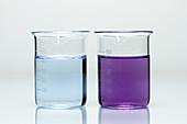 Biuret Test for Proteins