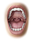 Mouth, illustration