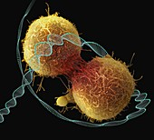 Cancer and DNA, conceptual composite image