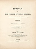 'Fossil Mammals' (1840) from Darwin's Beagle voyage