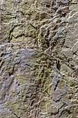 Cevennes schist metamorphic rocks