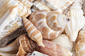 Seashells and Sand