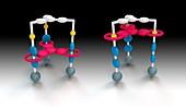 Molecular elevator, molecular model