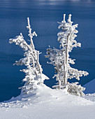 Ice and Hoarfrost Coated Trees, Crater Lake NP, OR