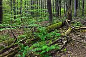 Hardwood Hemlock forest
