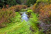 Sand Spring Creek