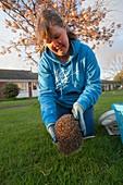 Releasing rehabilitated hedgehog