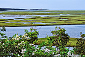 View from Fort Hill trail, Cape Cod, Massachusetts, USA