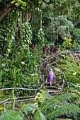 Stairs by Rainbow Falls, Hawaii