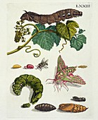 Insects of Europe, 18th century