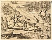 Spanish soldiers killing sea lions, 16th century