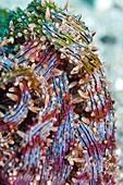 Snake sea anemone
