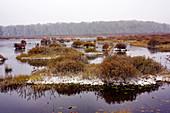 Black Moshannon Bog