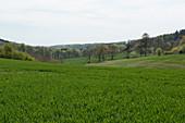Wheat Crop Development