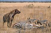 Hyena & Jackals