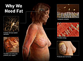 The Functions of Fat