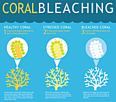 Coral Reef Bleaching Infographic
