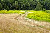 Road through a summer meadow