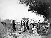Contraband Planting Sweet Potatoes, 1862