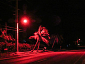 Red Lights for Sea Turtles