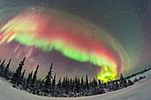 Colourful Auroral Arc over Boreal Forest