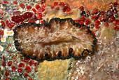 Lightning Flatworm