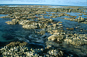 Reef Crest at Low Tide