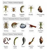 Macroinvertebrates Chart, Pollution Tolerance