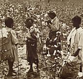 Children Picking Cotton, South Carolina, c. 1900