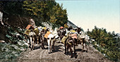 Pack Train On Mountain Road
