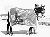Buffalo Soldier Pack Mule, Myrtle