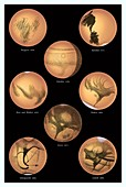 History of Mars observation from 1659 to 1894