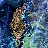 Algae bloom in the Baltic Sea, satellite image