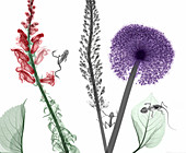 Flowering plants, frogs and bearded dragon, coloured X-ray