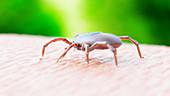 Illustration of a tick crawling on human skin