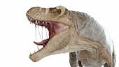 Illustration of a T-rex