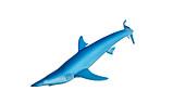 Illustration of a blue shark