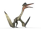 Quetzalcoatlus, illustration