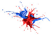 Red and blue paint explosion, illustration