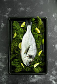 Fresh sea bass with fennel and limes