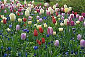 Frühlingsgarten mit Tulpen und Anemonen
