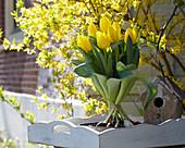 Tulipa 'Kikomachi'