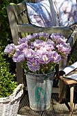 Tulipa 'Violet Prana'